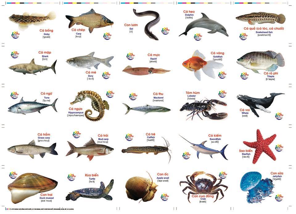 Thẻ học thông minh Song ngữ Anh-Việt 16 chủ đề 416 thẻ chủ đề các con vật